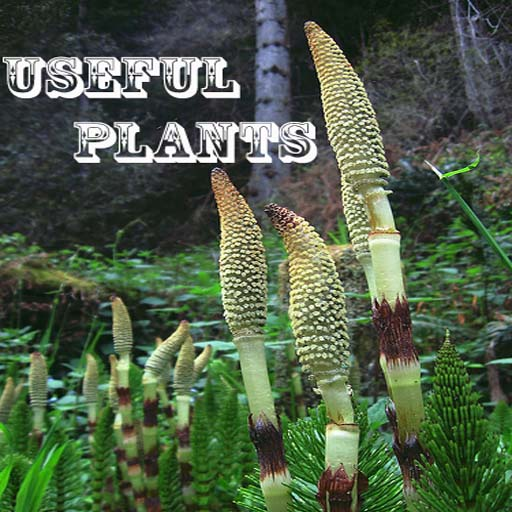 "UsefulPlants ""iPhone Version"""