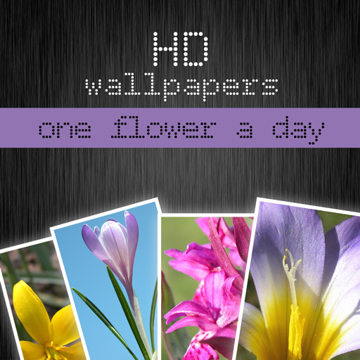 HD flower wallpapers - one flower a day (Retina display)