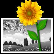 iSplash颜色 - 颜色或重新着色的照片效果编辑器
