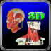 3D Human Head & Neck Muscle_HD