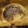 2012玛雅末日预言-揭示末日预言真相