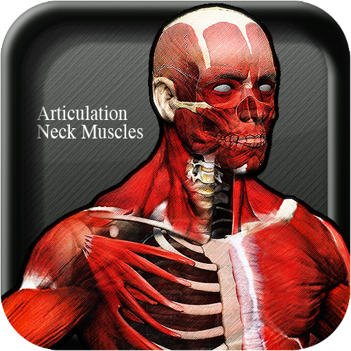 Articulation Neck Muscles