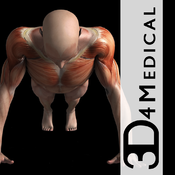 [MAC] iMuscle v1.2 (MacAppStore) - ENG