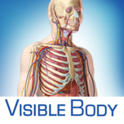 visible-body-3d-human-anatomy