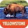 Yellowstone National Park - The Official Guide (Full Version)