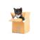 Kitten Memo