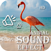 Animal Sounds Collection For Toddlers HD icon