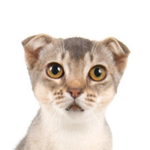 Gato que habla 2