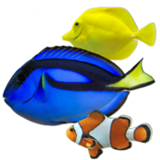 BluScenes Coral Reef Aquarium HD