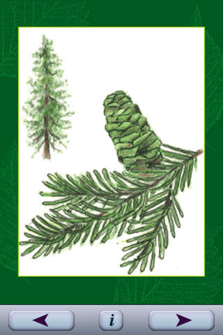 Trees, A Sierra Club deck of Knowledge Cards published by Pomegranate Communications screenshot 2