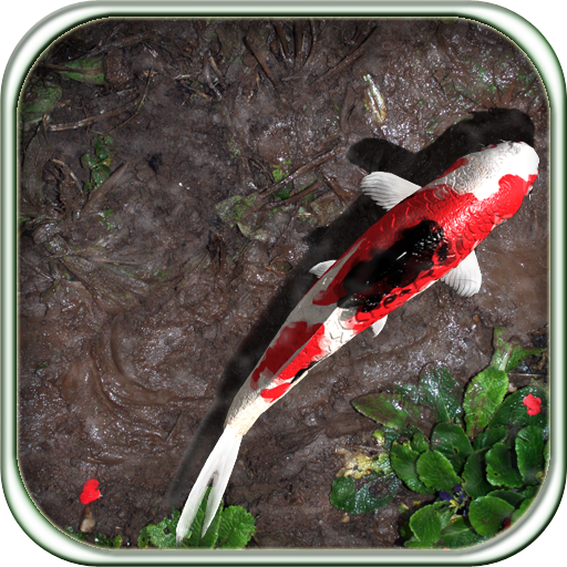 Pocket Pond Hd On The App Store On Itunes