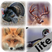 Pro Animal Calls lite - iTunes App Ranking and App Store Stats