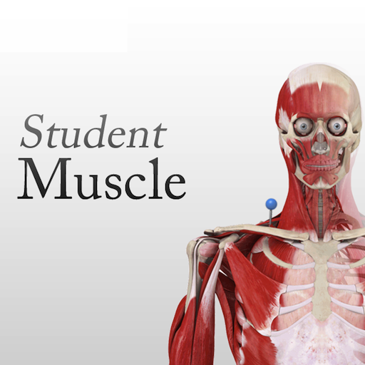 Student Muscle System