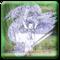 icon.60x60 50 2014年6月30日Macアプリセール ペイントツールアプリ「キャンディーアップル:ベクターグラフィックスデザイン」が値下げセール!
