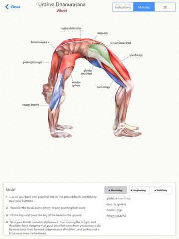 3D Yoga Anatomy Screenshot