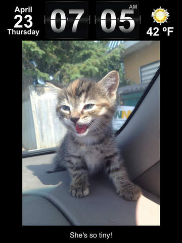 Cute Animal Pics Watch App - Fun pictures for children, young kids, and adults Screenshots