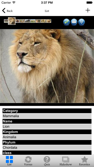 Animals Zone