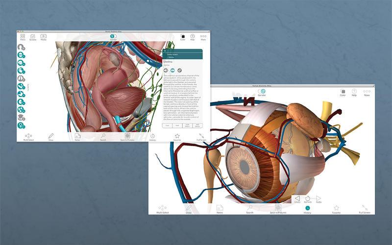 Human Anatomy Atlas – 3D Anatomical Model of the Human Body скриншот программы 2