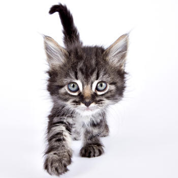Cat and Kitty! Adorable cat pictures and cute kitten photos for wallpapers and backgrounds LOGO-APP點子