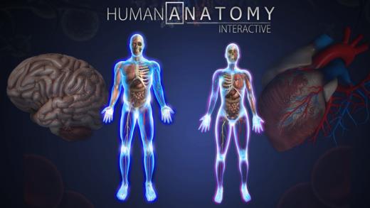 Human Anatomy Chart by Popar