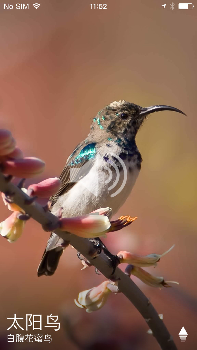 动物通识 免费: 声音与图片