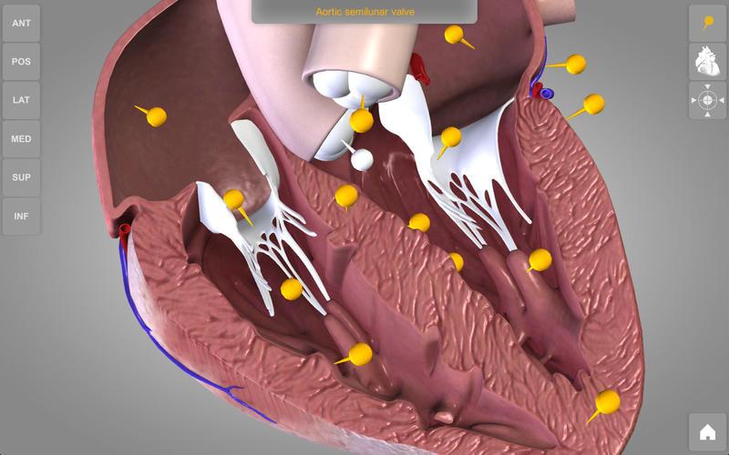Heart 3D Atlas of Anatomy Lite Screenshot - 2