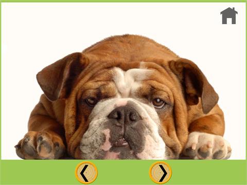 Dogs Trapshooting For children vip iPad Screenshot 5