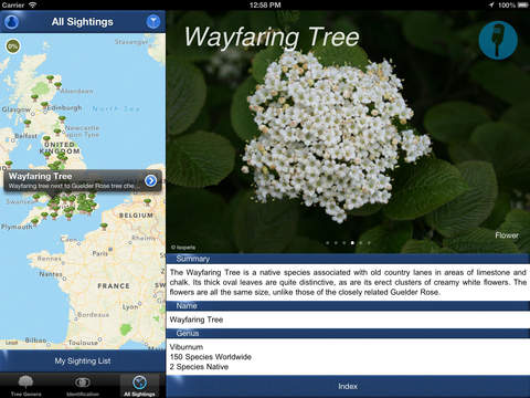 TreeId - The British Tree Identification Guide iPad Screenshot 5