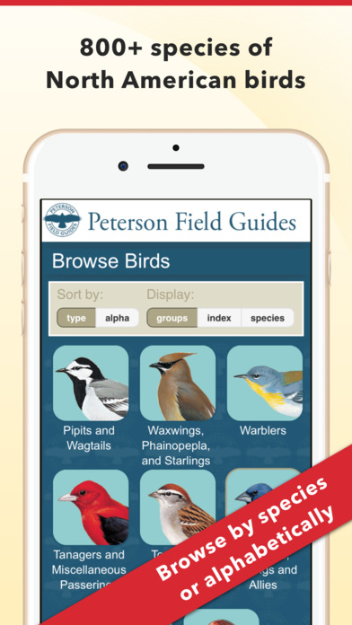 Peterson Bird Identifier & Field Guide Screenshot