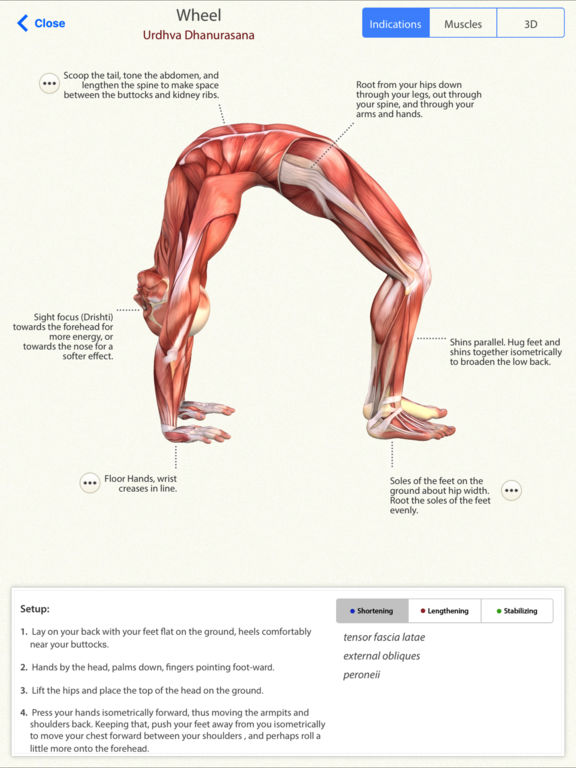 3d Yoga Anatomy Ipa Cracked For Ios Free Download