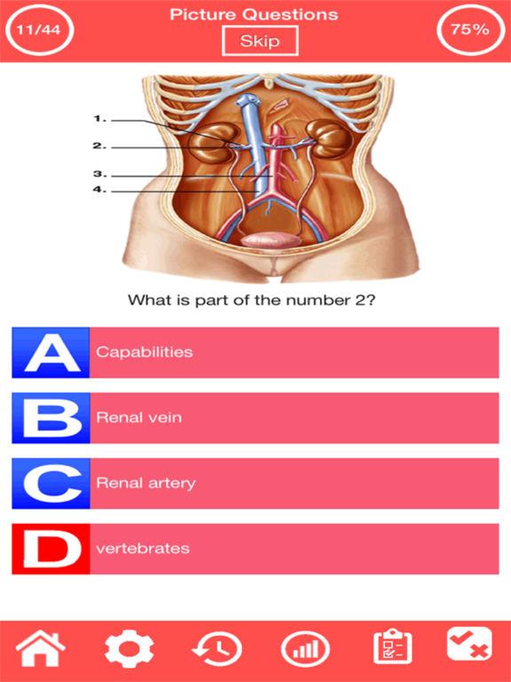 Human Urinary System Quiz screenshot 8
