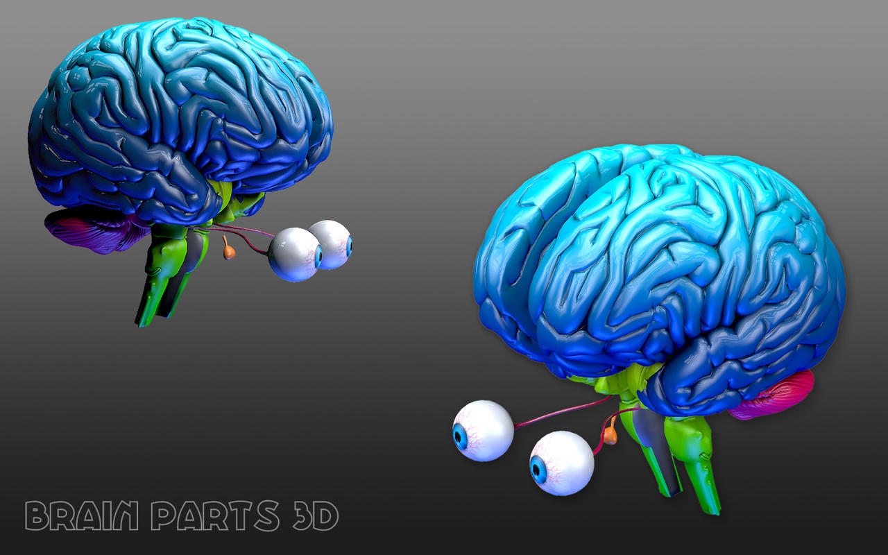 App Shopper: Brain Parts 3D (Medical)