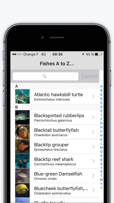 Red Sea Fishes Lite iPhone Screenshot 2