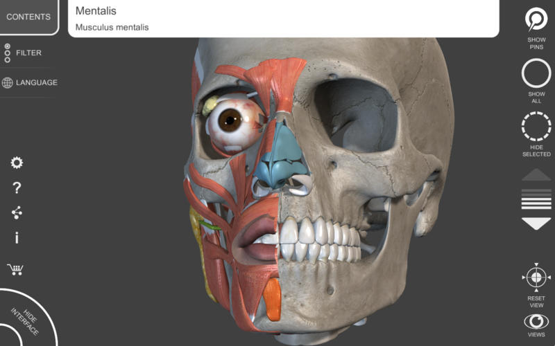 Muscular System 3d Atlas Of Anatomy App For Macs Download For
