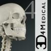 基本骨架2 Essential Skeleton 2