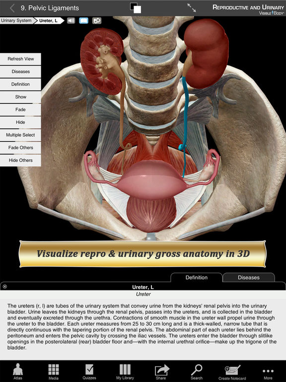 Reproductive and Urinary Anatomy Atlas: Essential Reference for Students and Healthcare Professionals Screenshots