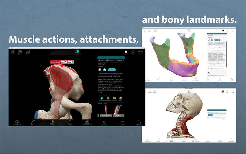 Human Anatomy Atlas 3d Anatomical Model Of The Human Body