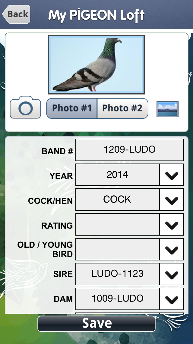My Pigeon Loft Hd Best Apps And Games
