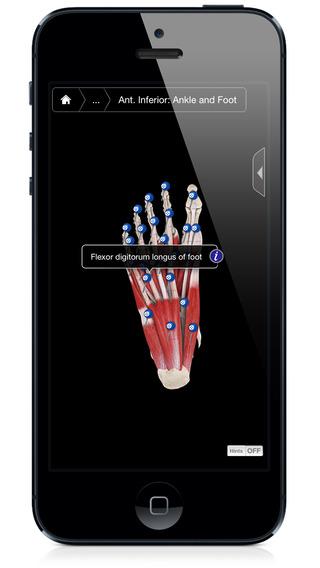 玩免費音樂APP|下載Muscle System Pro III - iPhone Edition app不用錢|硬是要APP