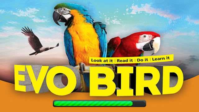 EVO BIRD - Augmented Reality