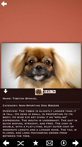 Dogs Info Pro