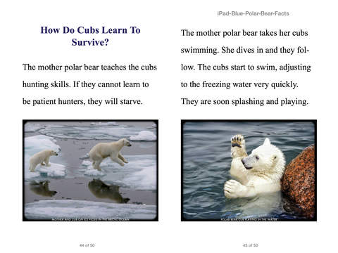 Facts About Polar Bears For Kids 6-8 by Cindy Bowdoin on iBooks