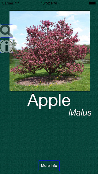 Plant Dictionary Common Pro and Latin Names with Pictures