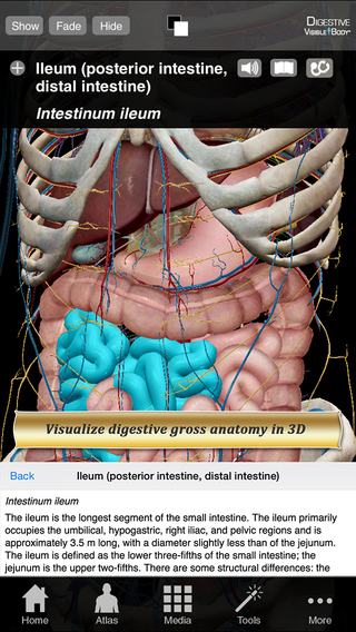Digestive Anatomy Atlas: Essential Reference for Students and Healthcare Professionals