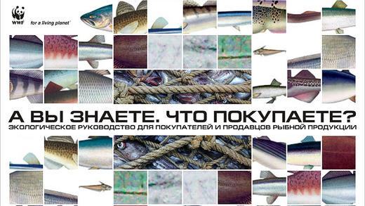 WWF России: публикации