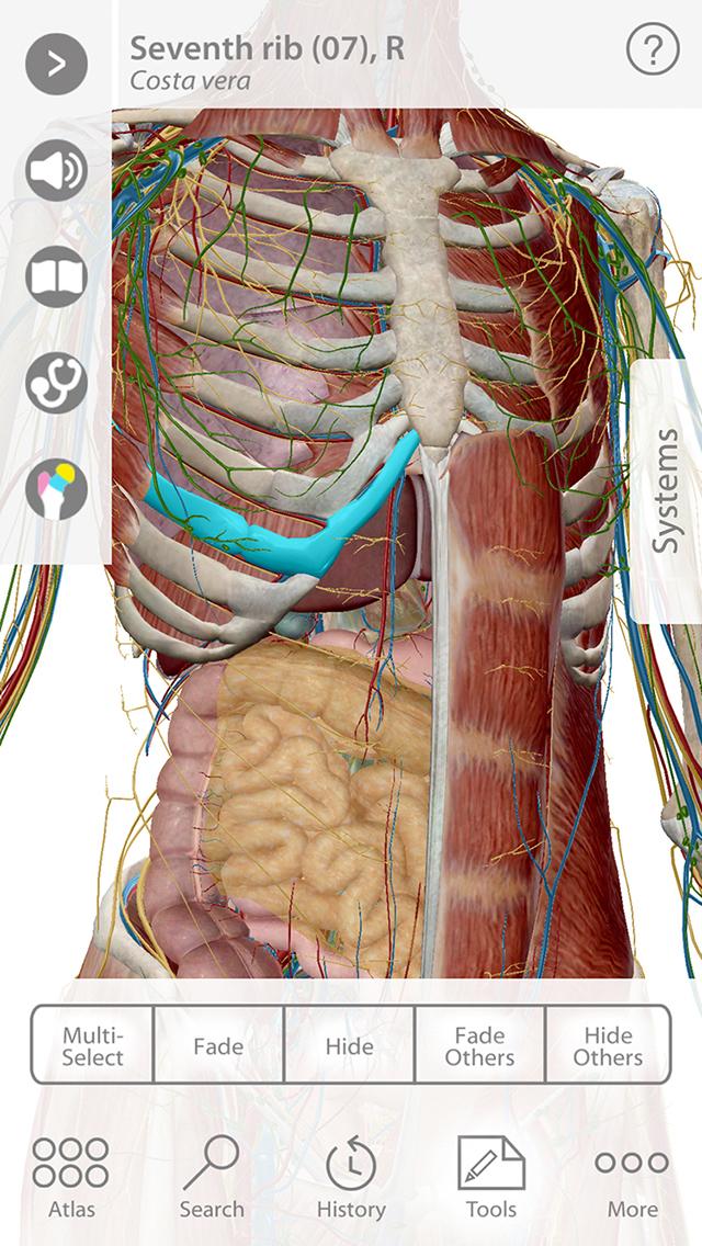 舌头根部结构图