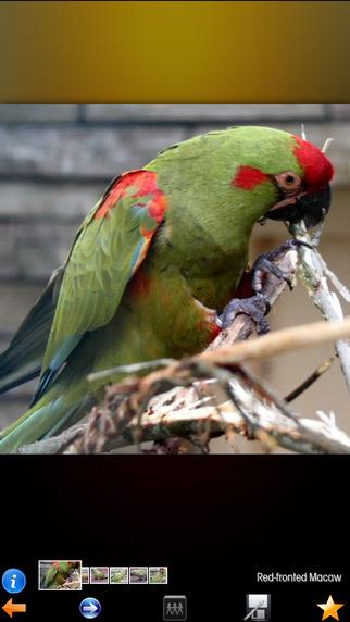Parrots Zone+