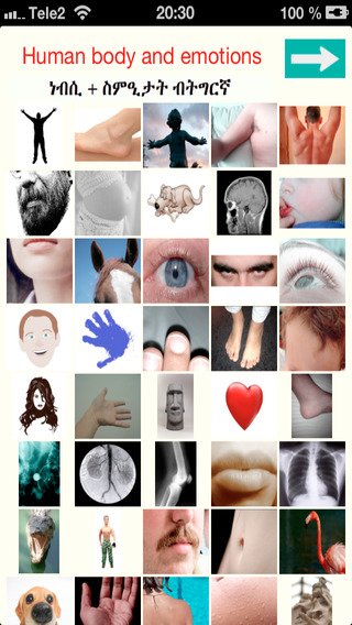 Tigrigna - Human body and emotions