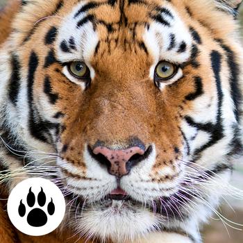 Forest & Jungle Animals Puzzles: Vol.2 LOGO-APP點子