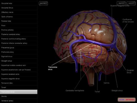 Brain - Spinning 3D Anatomy By Catfish Animation Studio S.r.l.
